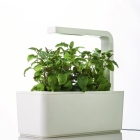 Kitchen Hydroponics
