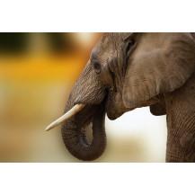 Canvas Prints Big 5 Collection - A0, Elephant 1