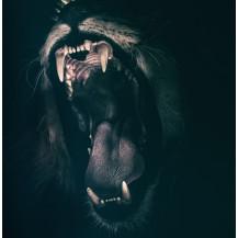 Canvas Prints Big 5 Collection - A2, Lion 3