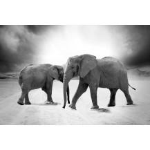 Canvas Prints Big 5 Collection - A2, Elephant 5