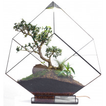 AE Automated Terrarium Cube - X Large, Black
