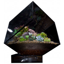 AE Geometric Terrarium Cube - Small, Black