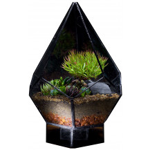 AE Geometric Terrarium Pentagon - Medium, Black