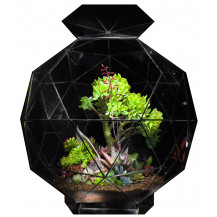 AE Geometric Terrarium Pentakis - Medium, Black