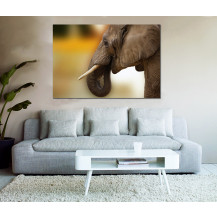 Canvas Prints Big 5 Collection - A0, Elephant 1