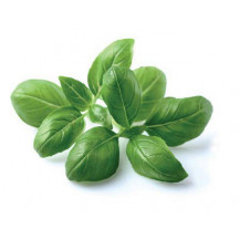 Click and Grow Plant Pods - Basil