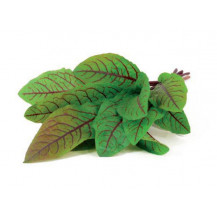 Click and Grow Plant Pods - 3, Bloody Sorrel
