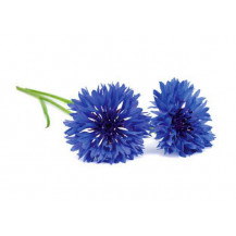 Click and Grow Plant Pods - 3, Cornflower