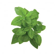 Click and Grow Plant Pods - 3, Dwarf Basil