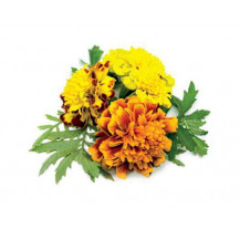 Click and Grow Plant Pods - 3, French Marigold