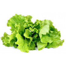 Click and Grow Plant Pods - 3, Green Lettuce