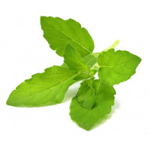 Click and Grow Plant Pods - 3, Holy Basil