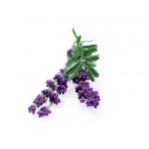 Click and Grow Plant Pods - 3, Lavender