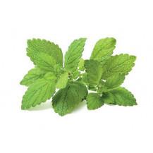 Click and Grow Plant Pods - 3, Lemon Balm
