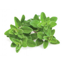 Click and Grow Plant Pods - 3, Marjoram
