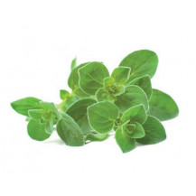 Click and Grow Plant Pods - 3, Oregano