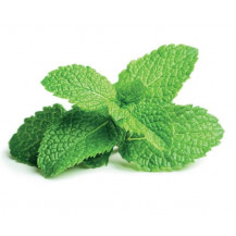Click and Grow Plant Pods - 3, Peppermint