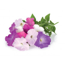 Click and Grow Plant Pods - 3, Petunia