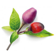 Click and Grow Plant Pods - 3, Purple Chili Pepper