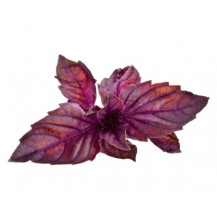 Click and Grow Plant Pods - 3, Red Basil