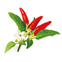 Click and Grow Plant Pods - 3, Red Hot Chili Pepper