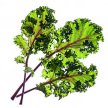 Click and Grow Plant Pods - 3, Red Kale