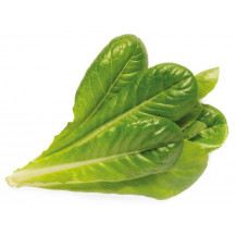 Click and Grow Plant Pods - 3, Romaine Lettuce