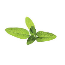 Click and Grow Plant Pods - 3, Sage