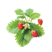 Click and Grow Plant Pods - 3, Wild Strawberry