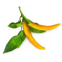 Click and Grow Plant Pods - 3, Yellow Chili Pepper