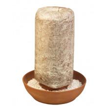 Mushroom Network Countertop Fruiting Chamber Kit - Terracotta Base, Grey Oyster