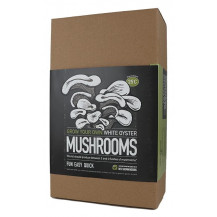 Mushroom Factory White Oyster Mushroom Grow Kit