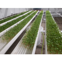 NFT Hydro MG-6 Microgreens System - 6 x 1.8m Growing Channels