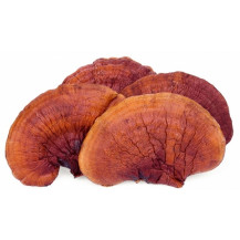 Reishi Mushrooms - Whole Mushrooms NOT Sold, Spawn Only