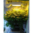 6 Pot DWC Hydroponic System with plants