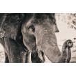 Canvas Prints Big 5 Collection - A1, Elephant 3