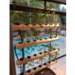 Urban Organics Chilli Hydroponic System