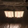 Kingbrite Quantum Board LED/UV Grow Light - 240W, Lm301H, 3500K