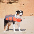 Outward Hound Ripstop Life Jacket - Large In Use