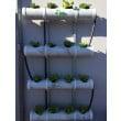 Urban Organics Mint Hydroponic System