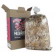 Mushroom Factory Pink Oyster Mushroom Grow Kit