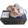 Rainbow Grey Oyster Mushroom Grow Kit