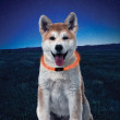 Nite Ize Nitehowl LED Dog Safety Necklace - Orange