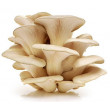 (Grey/Pearl Oyster Mushrooms - Whole Mushroom NOT Sold, Spawn Only