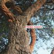 Rik Rhino CamoHide Camera Cover - In Use