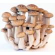 (Shimeji Mushrooms - Whole Mushrooms NOT Sold, Spawn Only