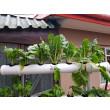 Urban Organics Magnolia Hydroponic System